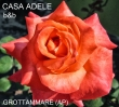 B&B CASA ADELE, GROTTAMMARE
