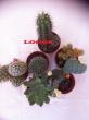 Logos piante-composizione di piante