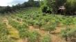 Agriturismo Fattoria boscherini