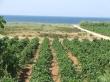 Agriturismo Masseria Baglio Tenute Montalto