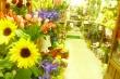 Il quadrifoglio fiori e piante-roma