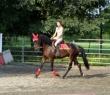 Super cavallo 8 anni